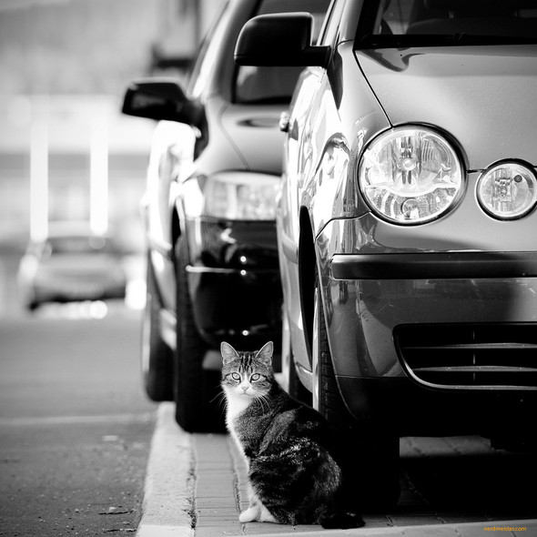 Котики и авто. Изображение № 17.