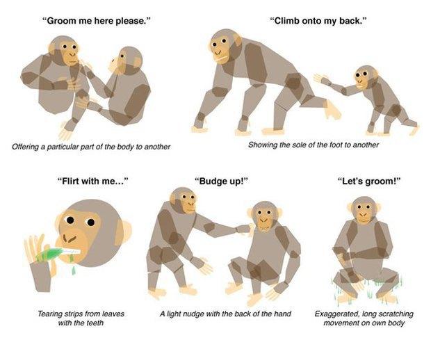 Язык животных: Как поговорить с собакой, дельфином и слоном. Изображение № 7.