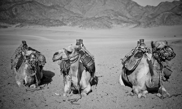 Черно-белые путешествия. Изображение № 108.