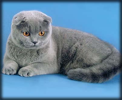 Кошки в интерьере. Изображение № 8.