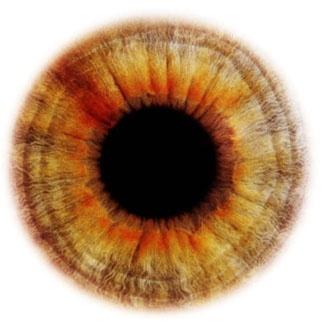 Фотограф Rankin — Eyescapes. Изображение № 4.