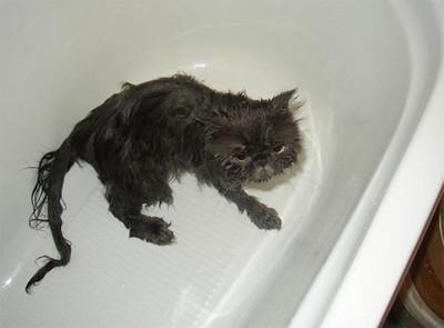 50 животных, которые ненавидят мыться. Изображение № 16.