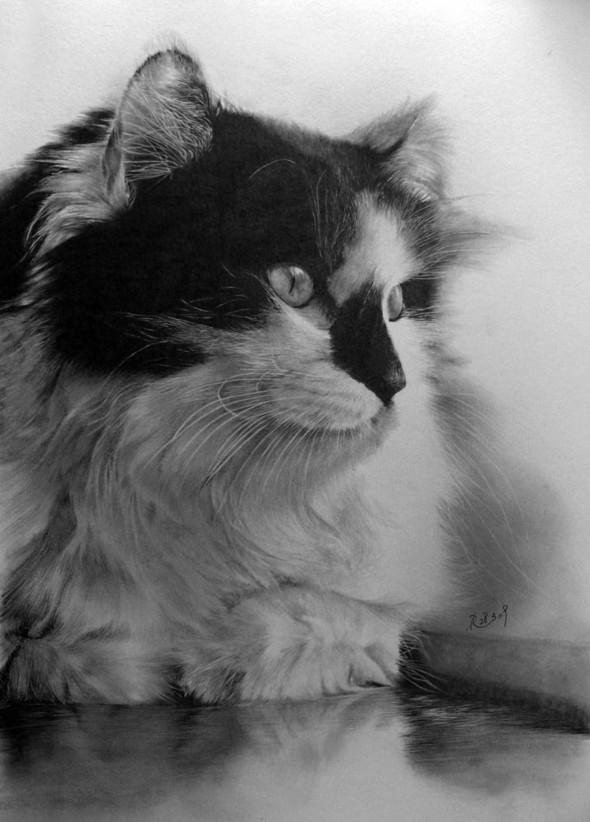 Paullung.и его коты. Изображение № 17.
