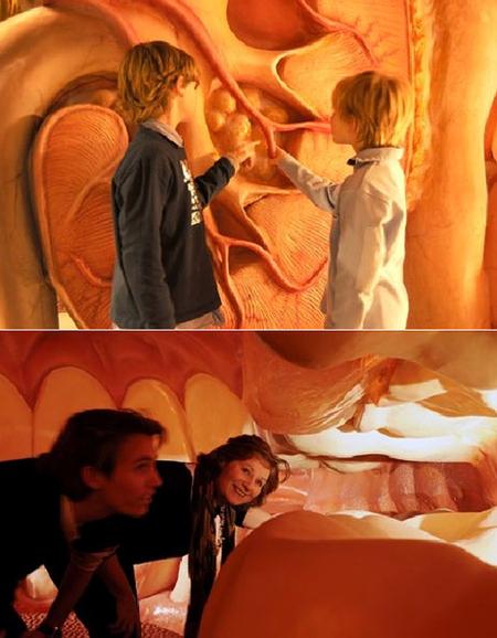 Corpus. Музей человеского тела вГолландии. Изображение № 9.