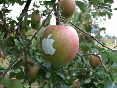ВЯпонии вырастили яблоки Apple. Изображение № 4.