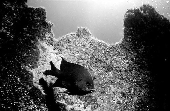 Подводная жизнь глазами фотографа Карлоса Франко. Изображение № 14.