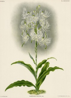 Глянцевые орхидеи: слухи, сплетни, комментарии. Изображение № 5.