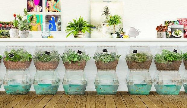 Самоочищающийся аквариум позволяет выращивать овощи. Изображение № 1.