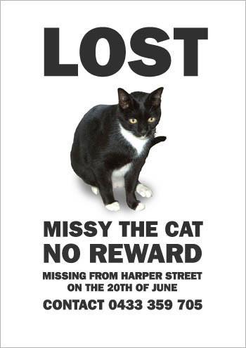 Кошка Мисси. Изображение № 7.