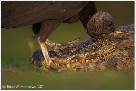 Победители Wildlife Photographer 2008. Изображение № 11.