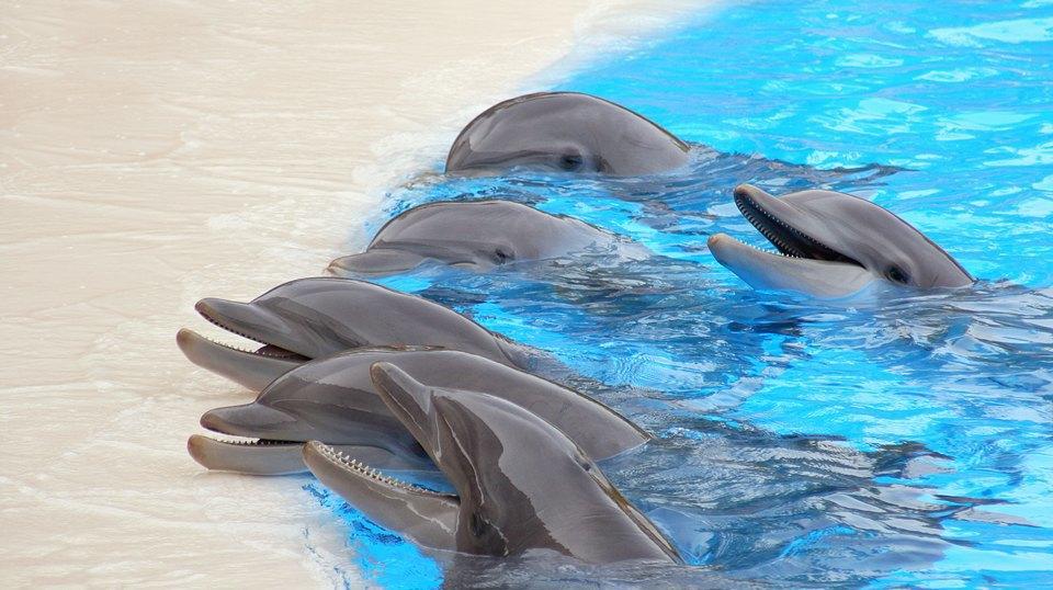 Язык животных: Как поговорить с собакой, дельфином и слоном. Изображение № 4.