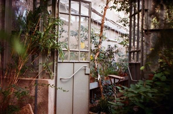 Прогулка по Ботаническому саду. Изображение № 11.