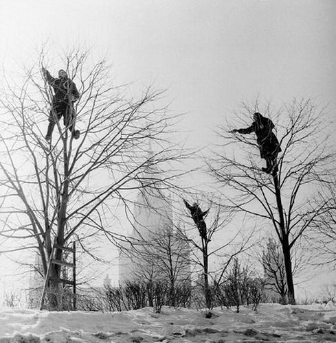 На ленинских горах, обрезка деревьев. Изображение № 179.