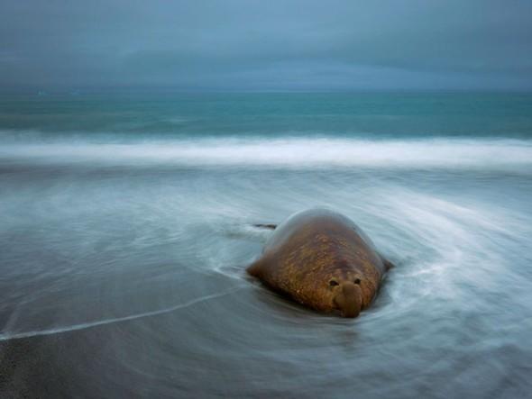 Лучшие новые снимки от National Geographic. Изображение № 32.