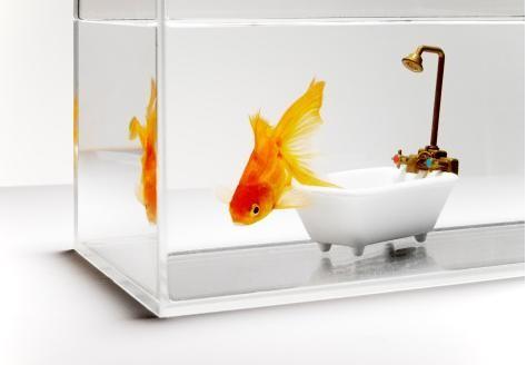 50 животных, которые ненавидят мыться. Изображение № 49.