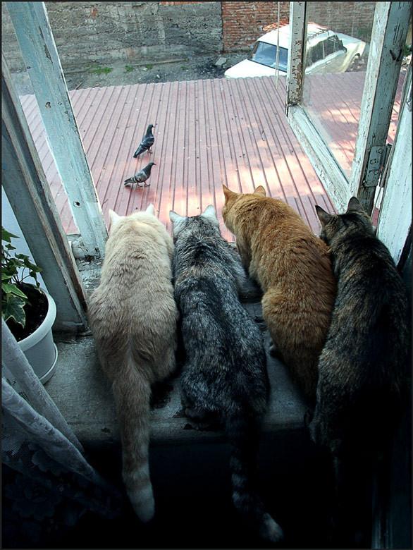 Блудливые коты. Изображение № 3.