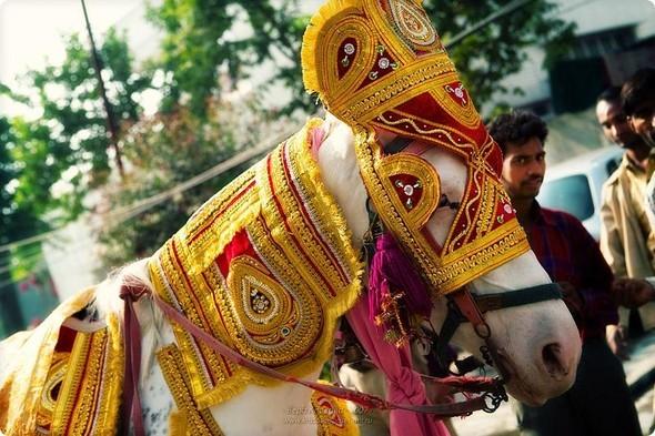 Надя иЧаранджит – Индийская сказка. Изображение № 52.