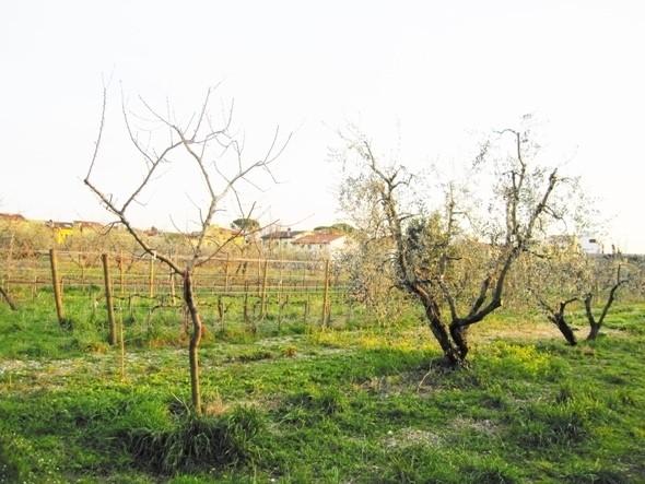 Изображение 11. Тосканское масло.. Изображение № 14.