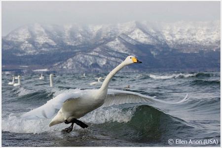 Победители Wildlife Photographer 2008. Изображение № 60.