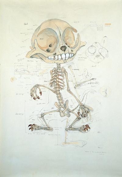 Мультяшные скелеты вшкафу ХюнгкуЛи. Изображение № 6.