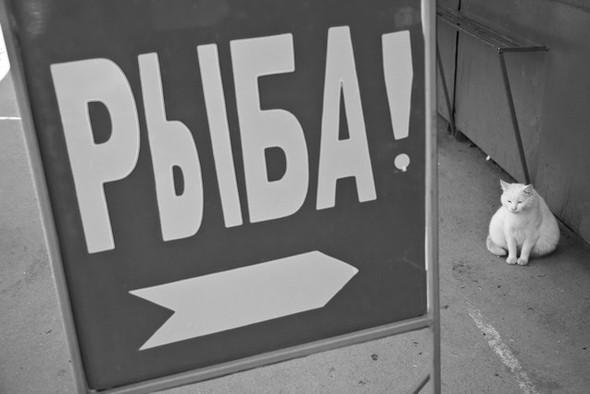 Черно-белые путешествия. Изображение № 38.