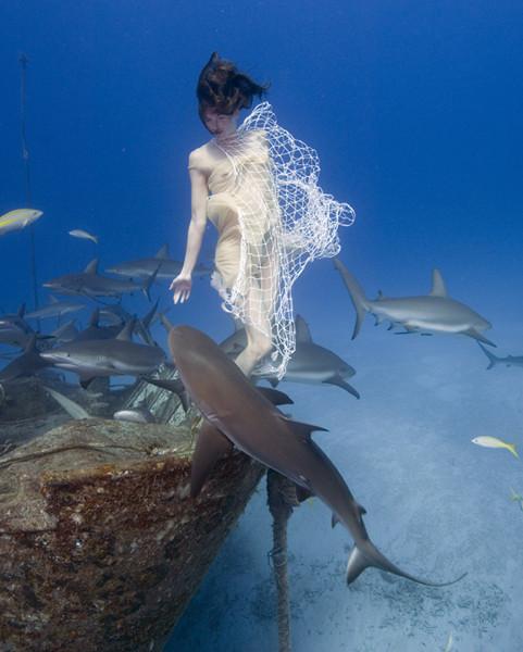 Todd Essick. Подводный мир. Изображение № 17.