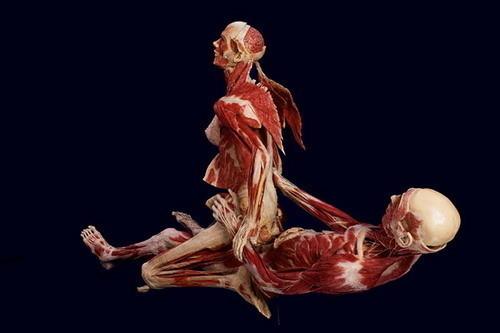 Скандальная выставка анатома Гюнтера ФонХагенса. Изображение № 5.