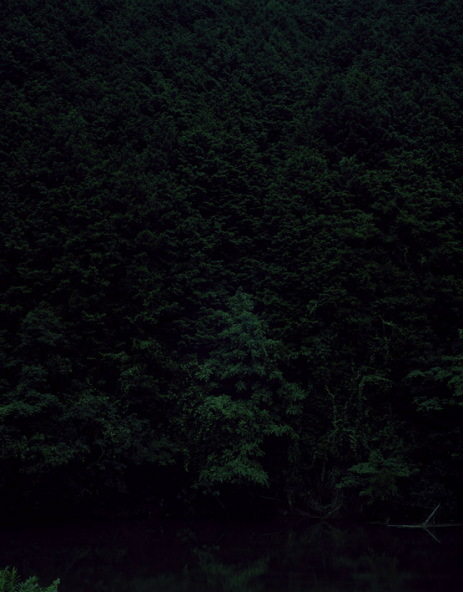 Темный лесКейты Сигиуры. Изображение № 13.
