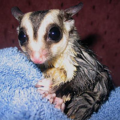 50 животных, которые ненавидят мыться. Изображение № 42.