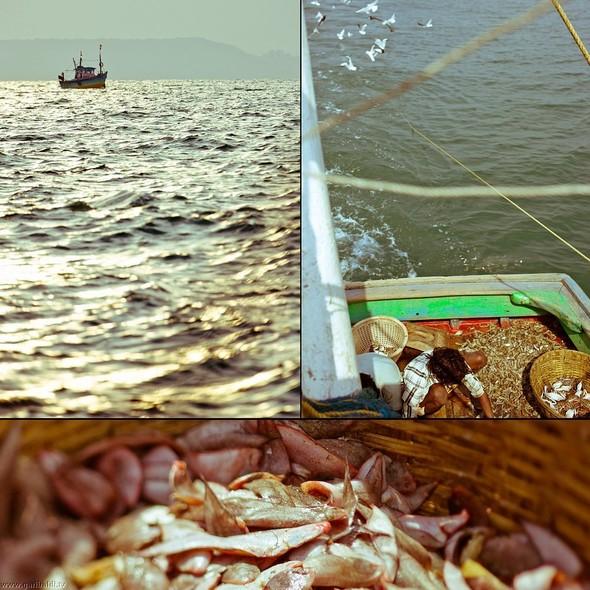 Shrimp boat MFR 646 DF GOA - Non stop. Изображение № 4.