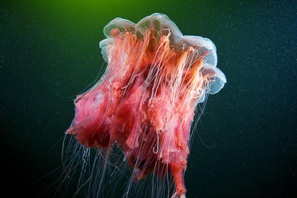 Фотография Александра Семенова: космос подводного мира. Изображение № 4.