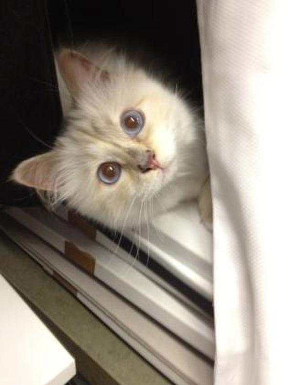 Кошка Карла Лагерфельда снялась для i-D. Изображение № 2.