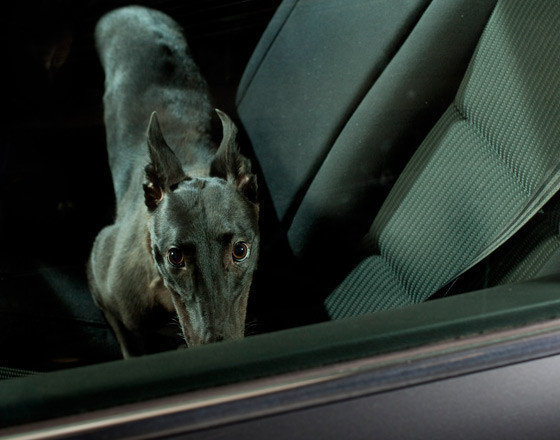The silence of dogs in cars. Изображение № 9.
