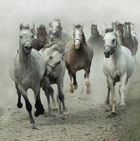 Фотографии лошадей Wojtek Kwiatkowski. Изображение № 4.