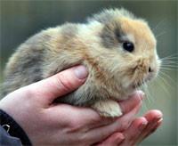В Германии оператор случайно убил знаменитого безухого кролика. Изображение № 1.