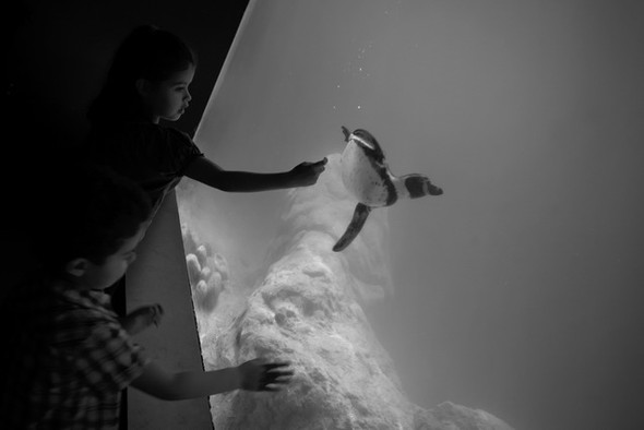 Черно-белые путешествия. Изображение № 73.