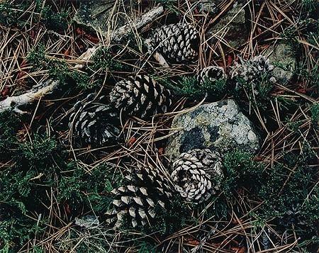 Элиот Портер: фотограф раскрасивший мир. Изображение № 25.