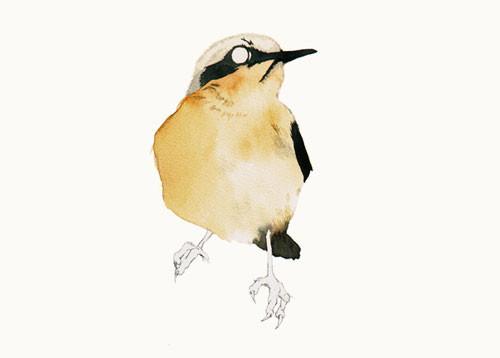 Birds Of Claire. Изображение № 6.