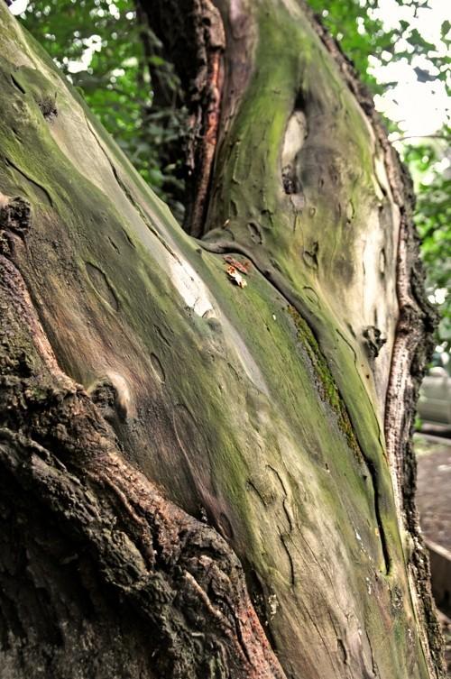 Treefilia. Изображение № 18.