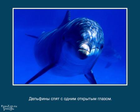 Животные иинтересные факты оних. Изображение № 23.