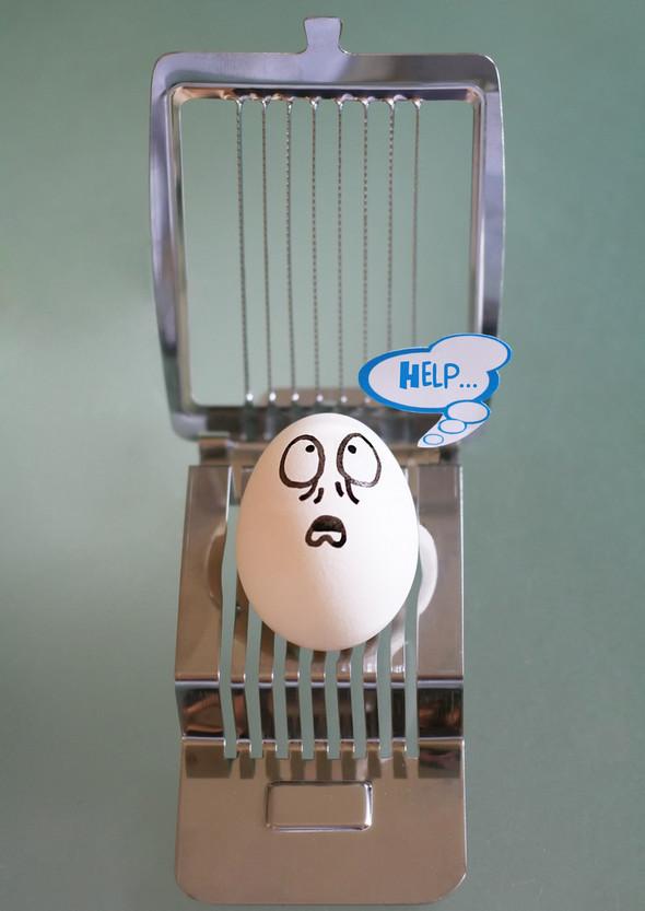 Удивительная жизнь яиц. Изображение № 1.