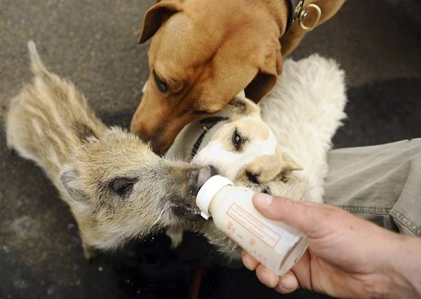Дружба - она и у животных дружба!. Изображение № 1.