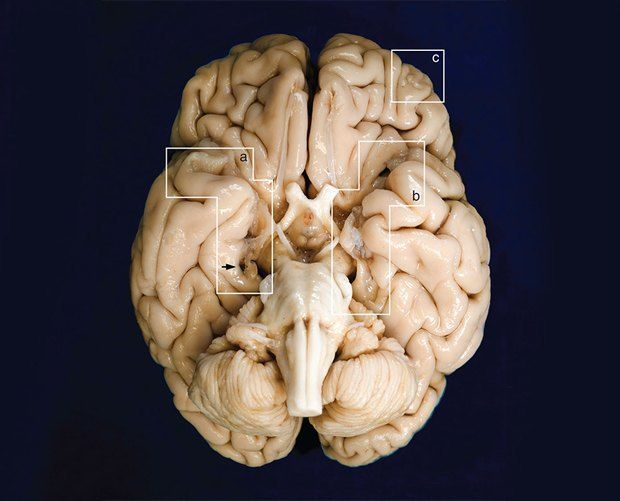 Чтобы помнили: как работает наша память и что изменит её в будущем. Изображение № 3.