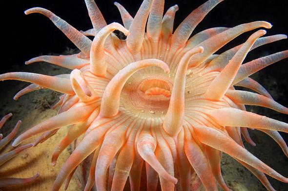 Фотография Александра Семенова: космос подводного мира. Изображение № 9.
