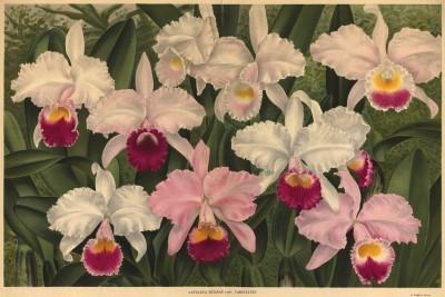 Глянцевые орхидеи: слухи, сплетни, комментарии. Изображение № 10.