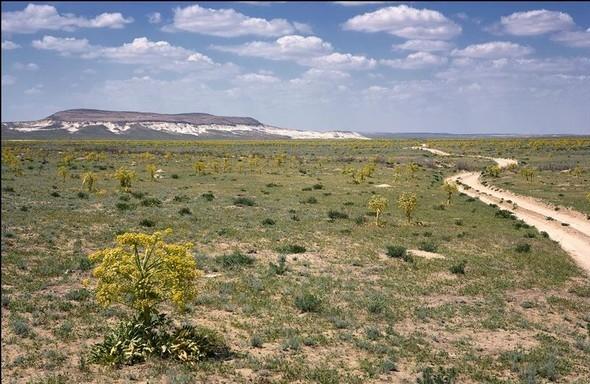 Западный Казахстан. Полуостров Мангышлак. Изображение № 23.
