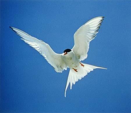 Элиот Портер: фотограф раскрасивший мир. Изображение № 11.