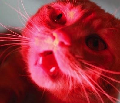 New animal models - животные в фэшн съемках. Изображение № 7.