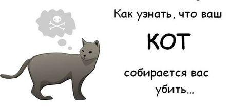 Какузнать, чтоваш котсобирается васубить. Изображение № 1.