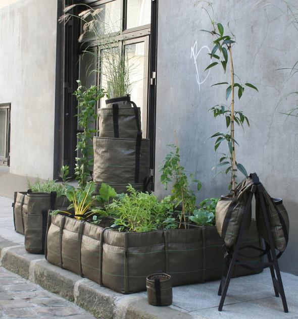 BACSAC для тех кто любит растения. Изображение № 1.